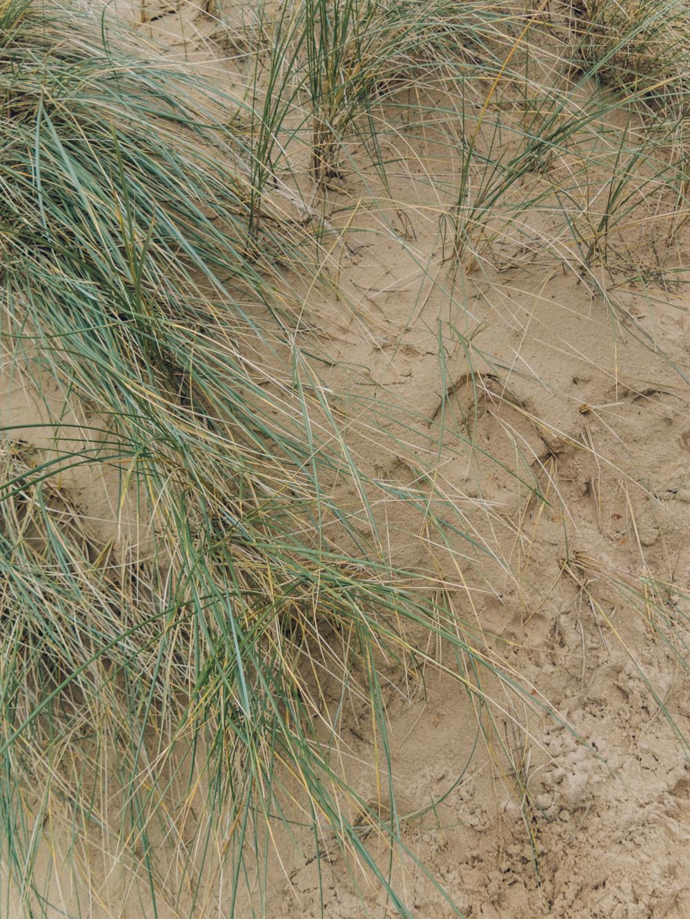 Haarkon Dune Sand Norfolk Beach Grass