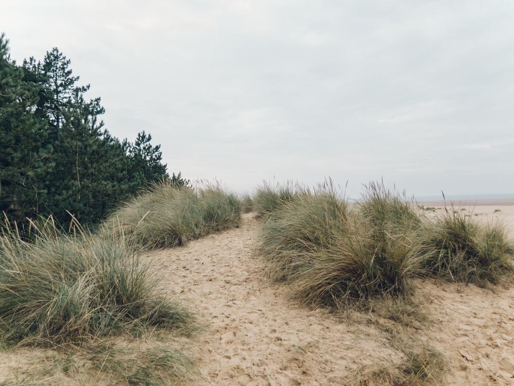 Haarkon Dune Norfolk Beach Tree Nature Coastal