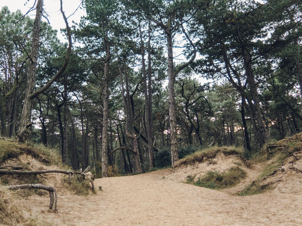 Haarkon Wood Pine Norfolk Wells Tree