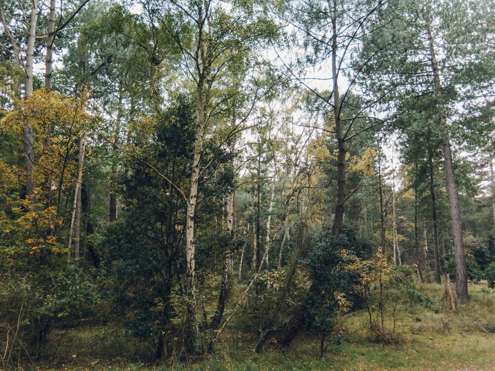 Haarkon Wood Tree Nature Green Norfolk