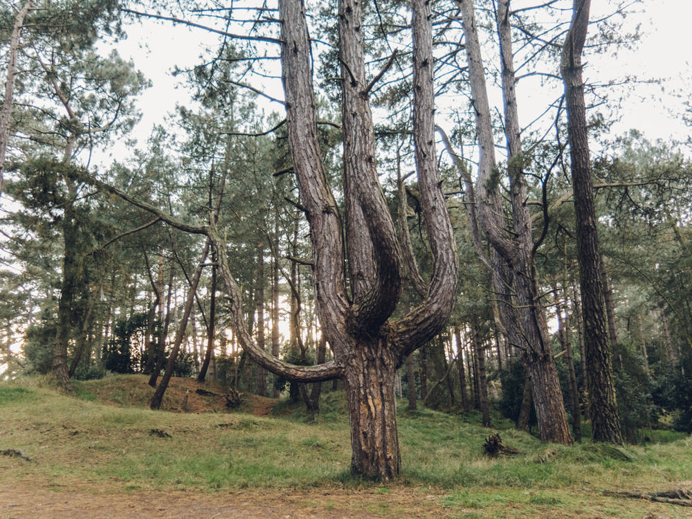 Haarkon Branch Tree Cactus Norfolk Wood