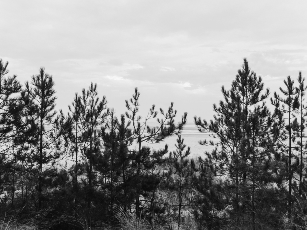 Haarkon Norfolk Tree Sea Coast Horizon Pine