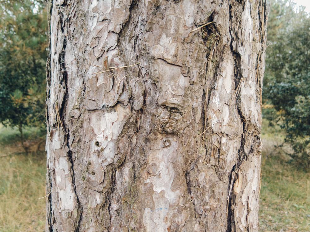 Haarkon Bark Tree Detail Wood Pinewood