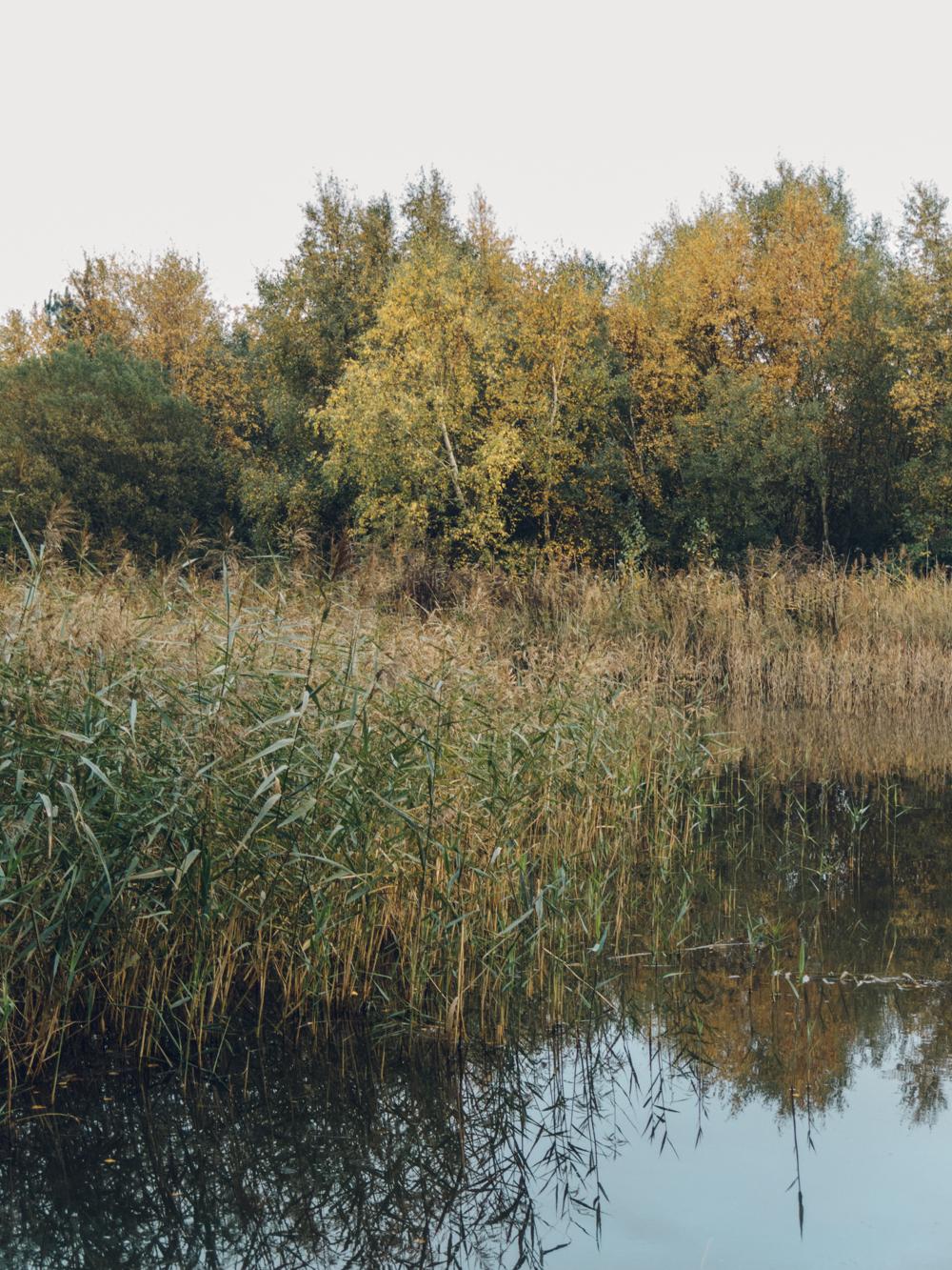Haarkon Pond Lake Norfolk Wells Pinewoods