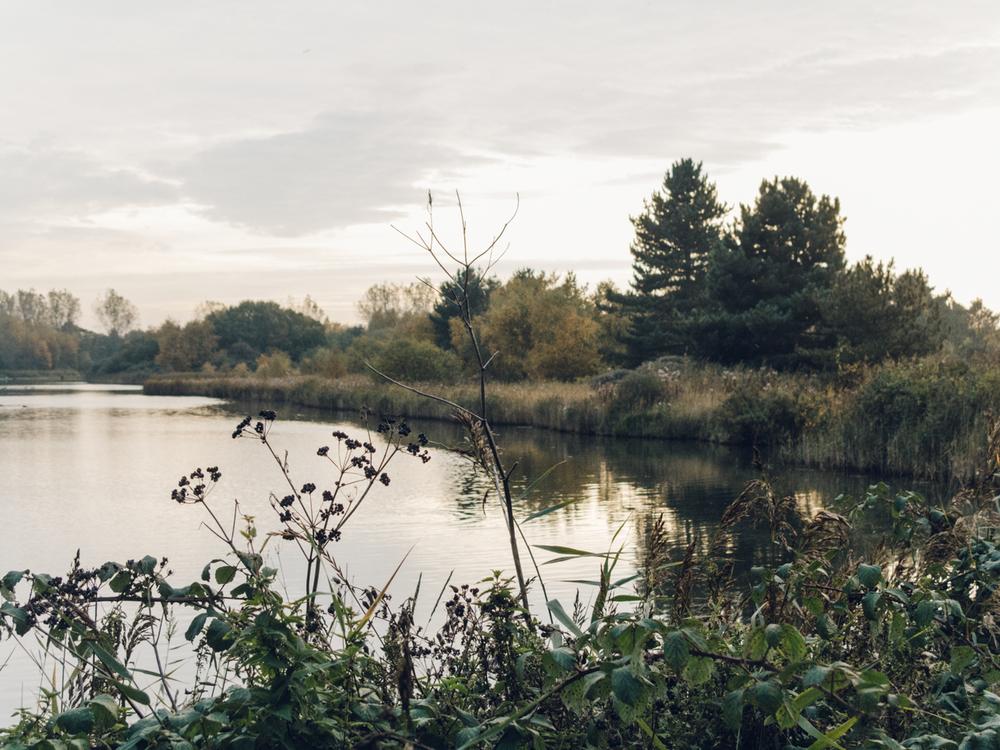 Haarkon Pond Lake Norfolk Evening Sunset
