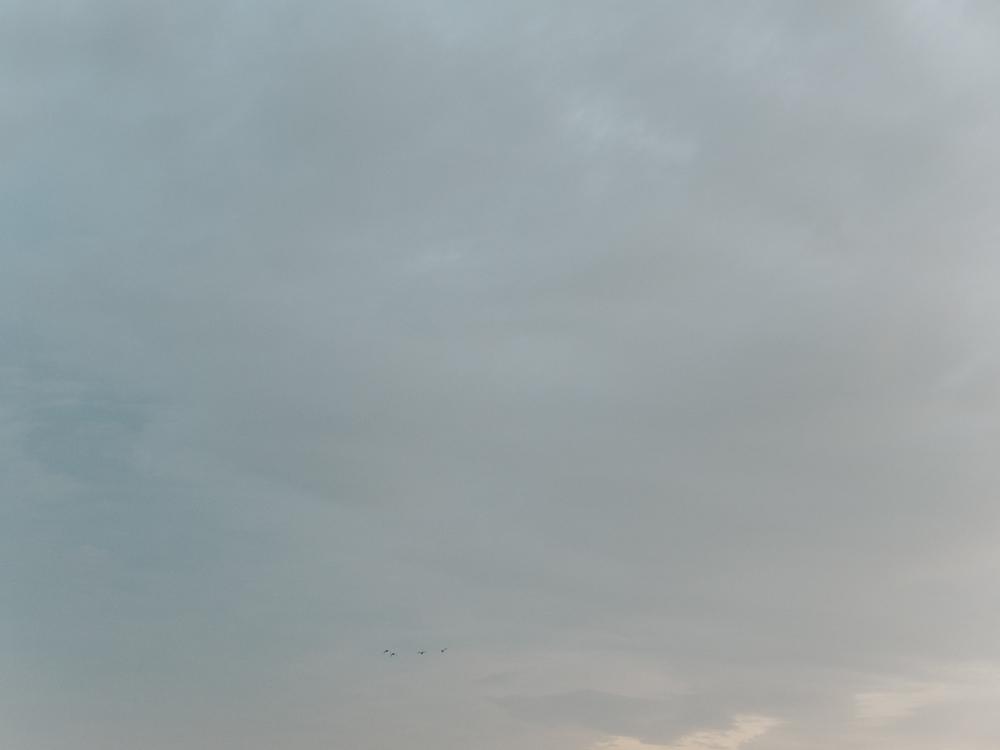 Haarkon Bird Nature Light Norfolk Sky