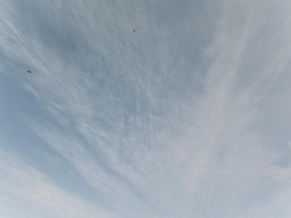 Haarkon Sky Skye Blue Bird Fly Travel