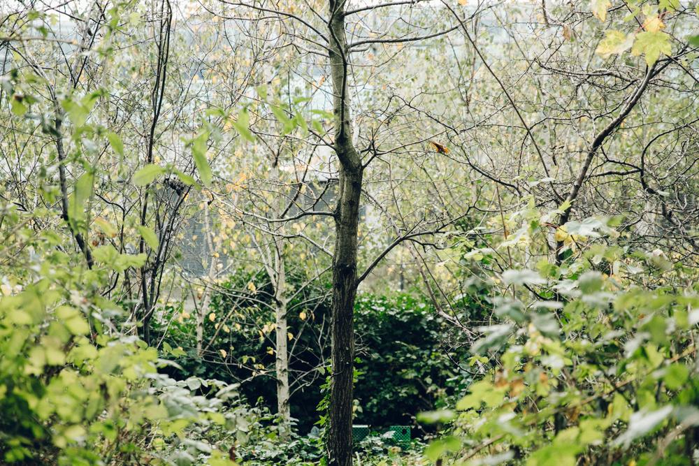 Haarkon Birch Tree Silver Bark Trunk Leaf Green