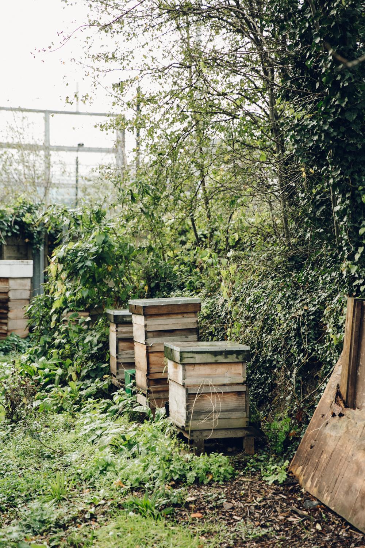 Haarkon Harkon Bee Bees Hive Hives Honey London Urban Allotment
