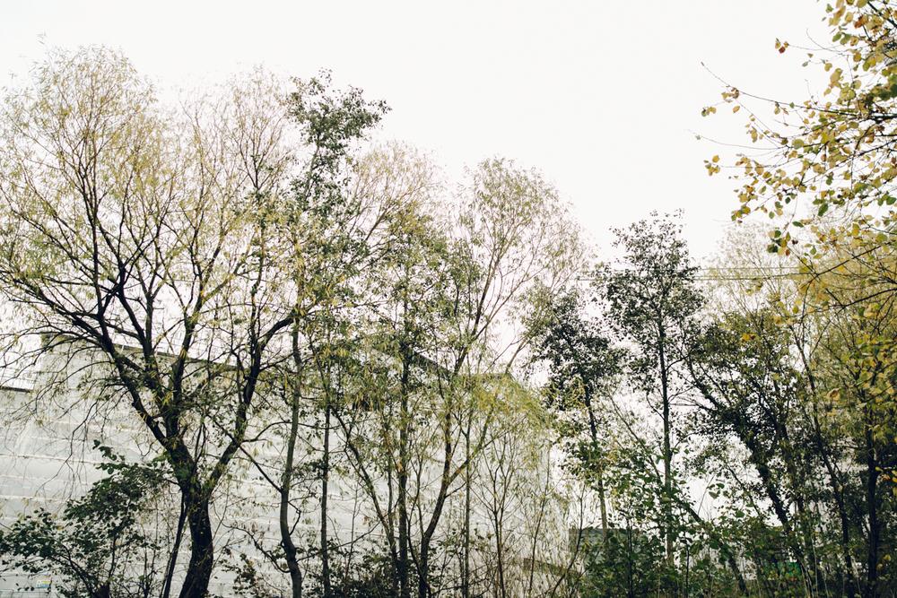 Haarkon London Building Construction Crane Tree Forest Wood Park Sky