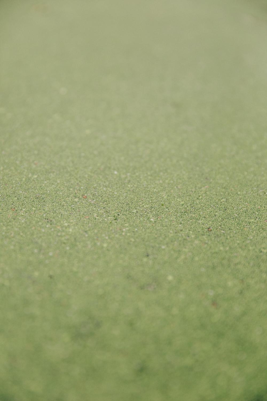 Haarkon Green Pond Algae Water London Park