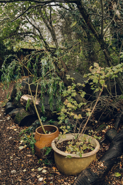 Haarkon Pots Garden Container Tree Acer Park London
