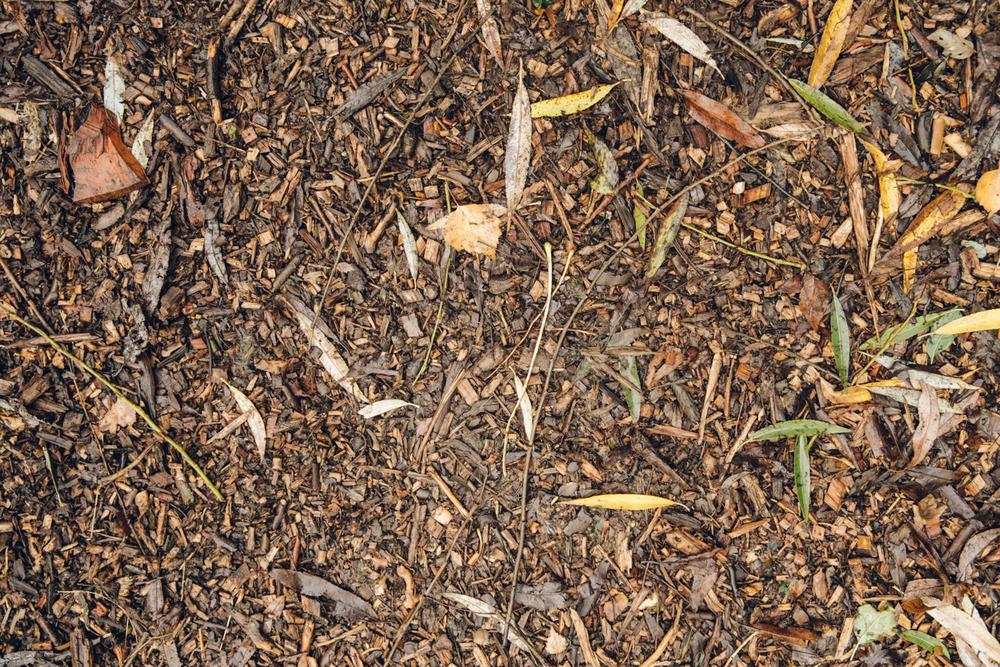 Haarkon Bark Floor Path Wood Park London Tree Leaf Mud Nature
