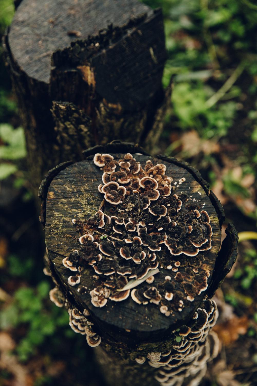 Haarkon Mushroom Fungi Nature Wildlife Plant Park London Camley Street