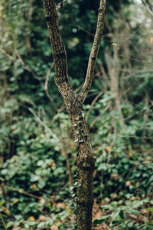 Haarkon Tree Ivy Branch Leaf Park Green