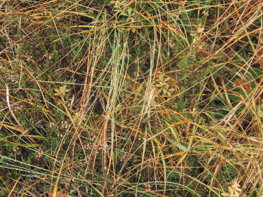 Haarkon Grass Nature Texture Colour Travel Scotland Autumn