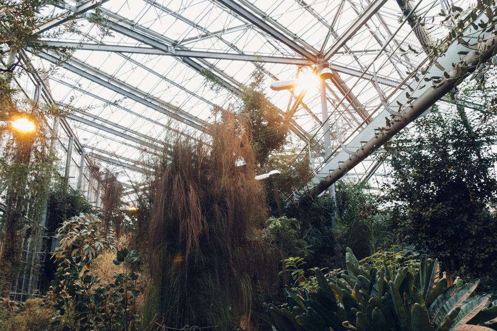 Haarkon Light Garden Tree Lamp Botanic