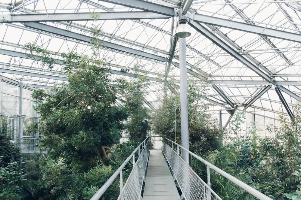 Walkway Haarkon Glasshouse Greenhouse Tree Walk Forest High