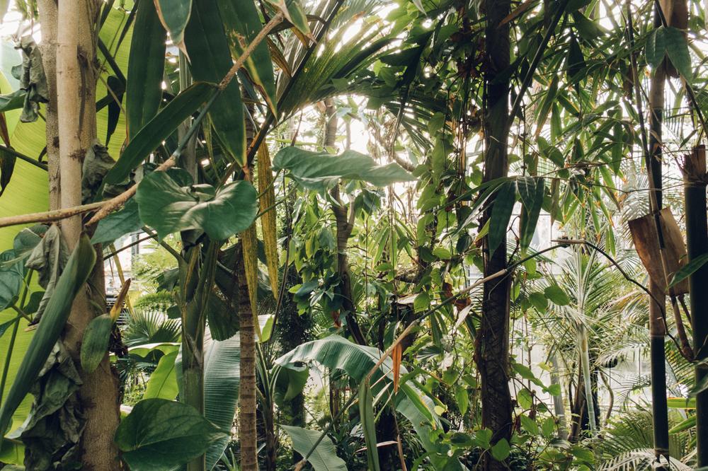 Haarkon Jungle Green Forest Amsterdam