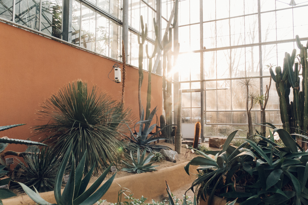 PlantsonPink Cactus Agave Americana Hothouse Amsterdam