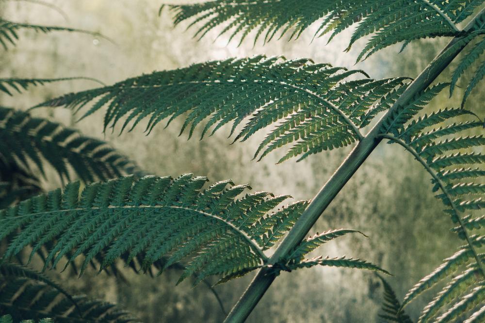 Haarkon Fern Fernery Green Foliage Plant