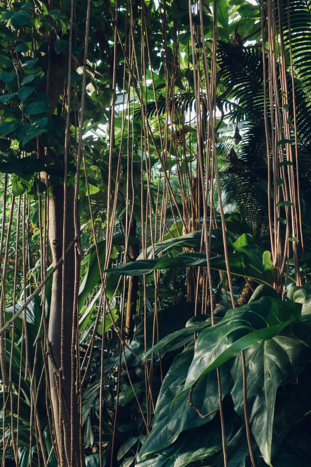 Haarkon Vines Vine Grow Forest Jungle Rainforest Garden Botanical