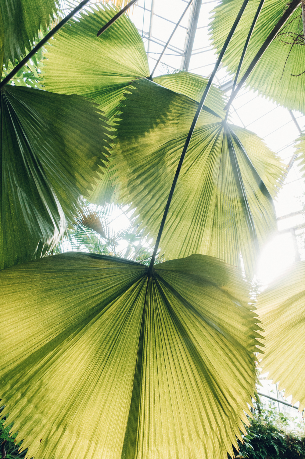 Haarkon Green Amsterdam Hortus Light Botanicus Botanical Garden Glasshouse