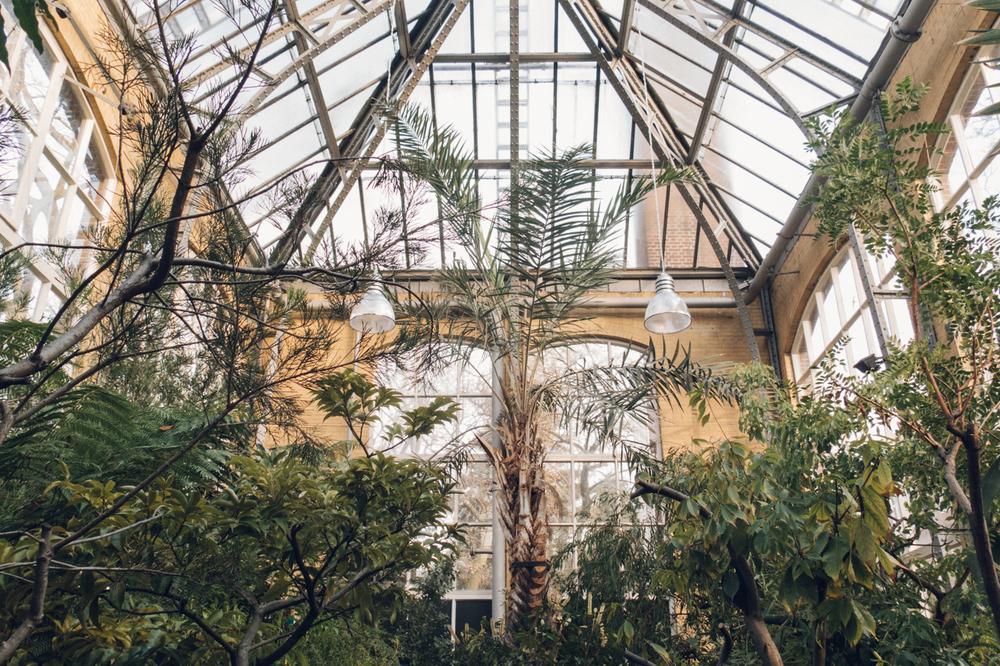Haarkon Hortus Botanicus Botanical Garden Botanic Forest Amsterdam Plants Foliage Greenery Light Photography