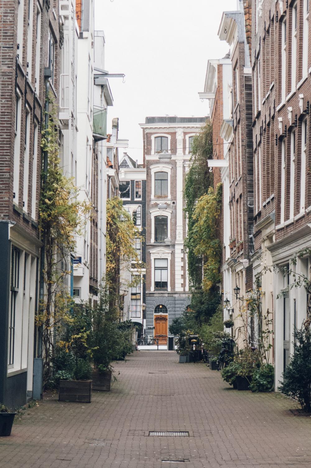 Amsterdam Travel Haarkon Photography Light Architecture Type Plants Urban Jungle Iamsterdam City