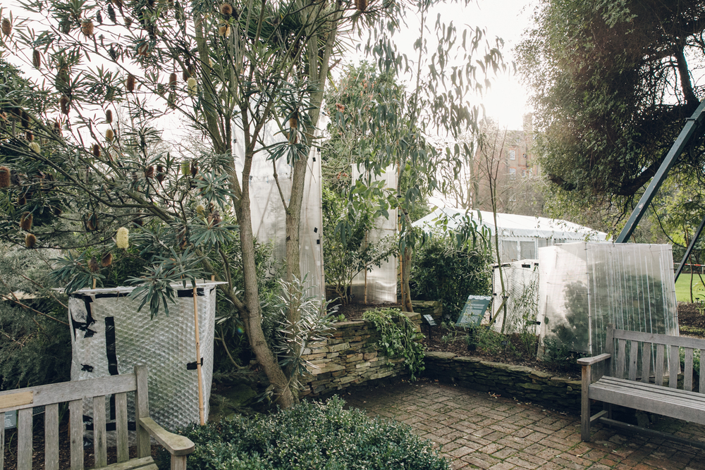 Haarkon Plants Garden Chelsea Physic Greenery Glasshouse Winter London