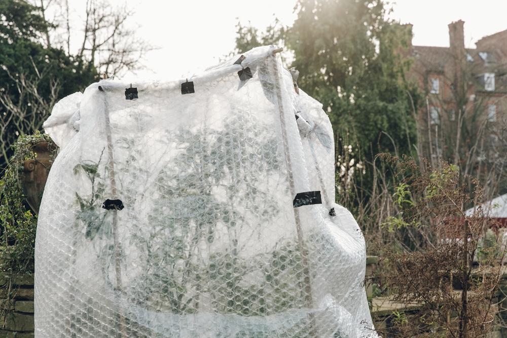 Haarkon Plants Garden Chelsea Physic Greenery Glasshouse Winter London