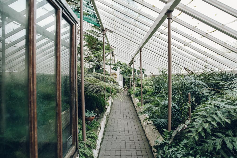 Haarkon Garden Chelsea Physic Greenery Winter Plants fern fernery