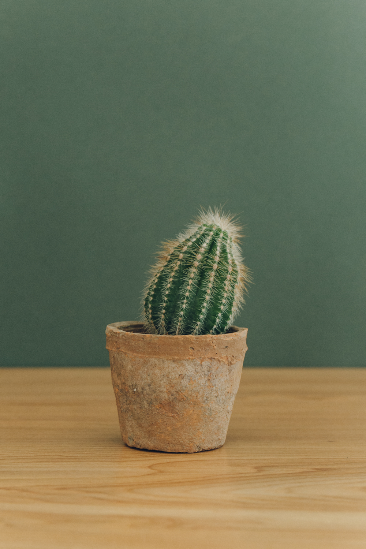 Haarkon Plant Succulent Cacti Cactus Plants Garden