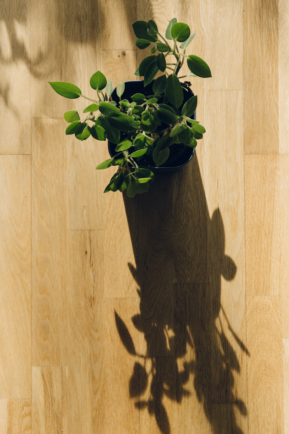 Haarkon Shadow Light Sun Plant Green Garden Leaves
