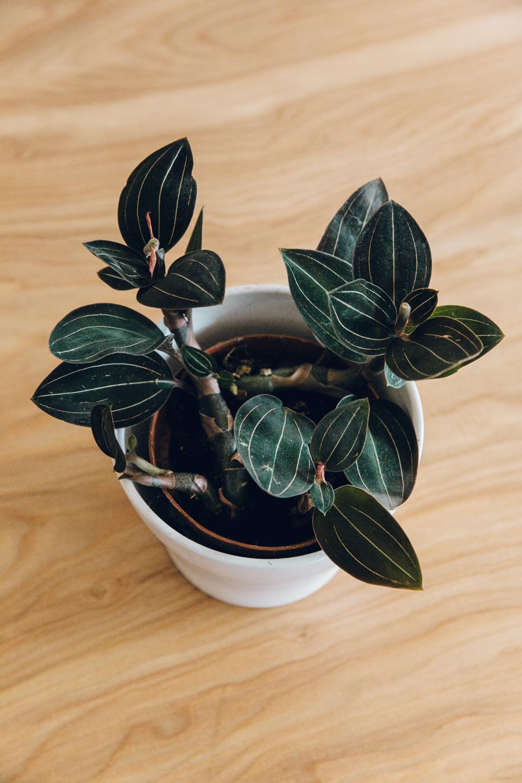 Haarkon Plant Foliage