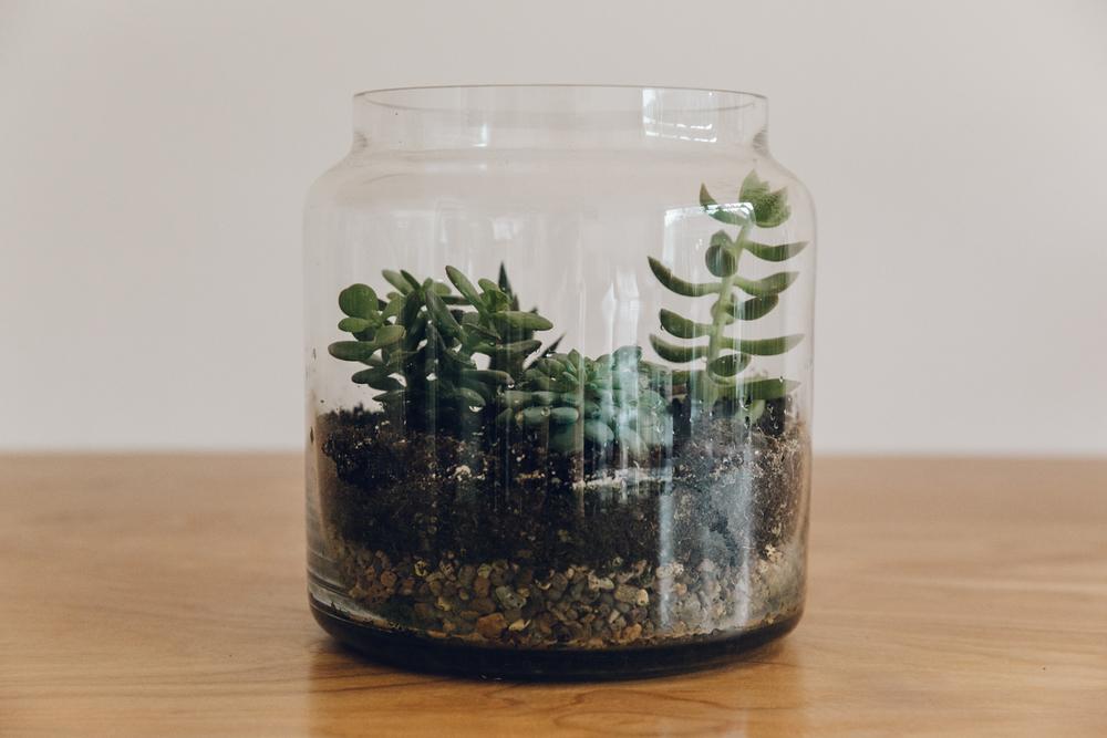 Haarkon Terrarium Planter Plants Succulents