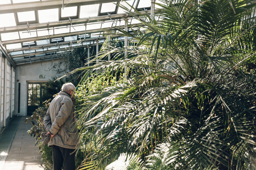 Haarkon Sheffield Botanical Gardens Pavilion Glasshouse Greenhouse Victorian Plants Greenery Park Man Looking