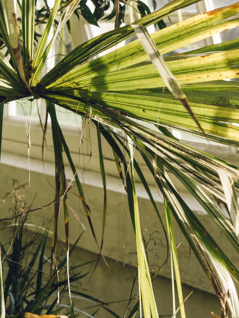 Haarkon Sheffield Botanical Gardens Pavilion Glasshouse Greenhouse Victorian Plants Greenery Park
