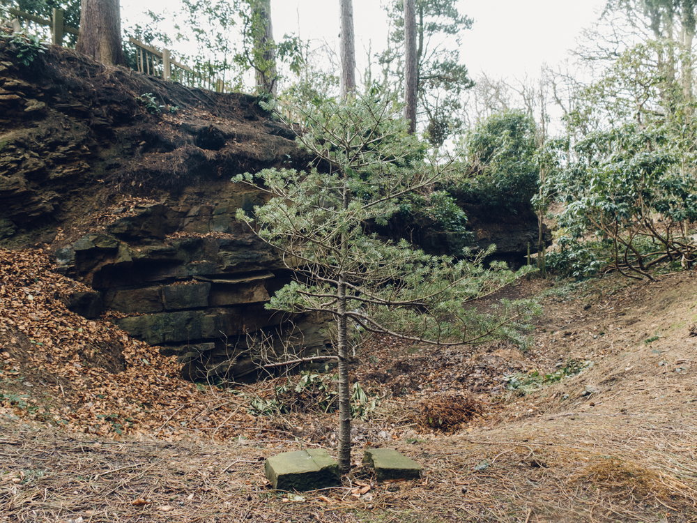 Haarkon Whinfell park garden japanese plants nature green winter sheffield travel rhodedendron pine tree