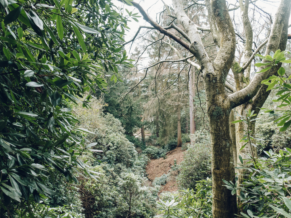Haarkon Whinfell Quarry Gardens Sheffield Redwood Trees Woods Rhodedendron Leaf green Travel