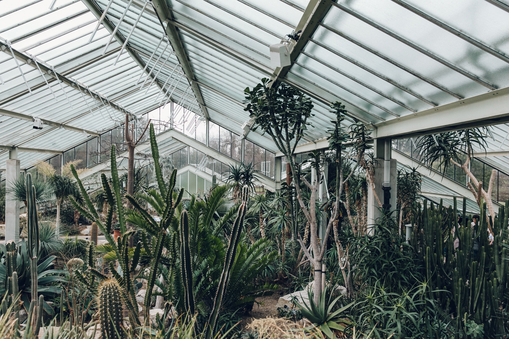 Haarkon Kew Gardens Conservatory Glasshouse Princess Wales Greenhouse Cacti Cactus Succulent Arid Desert Hothouse