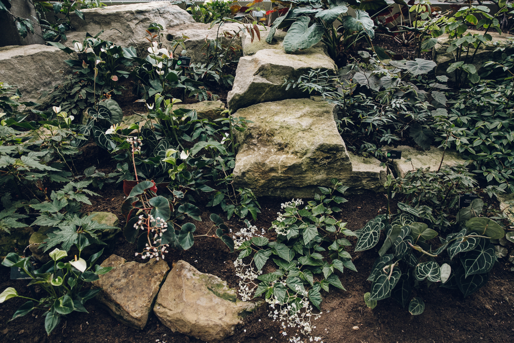 Haarkon Kew Gardens Conservatory Glasshouse Princess Wales Greenhouse Begonia