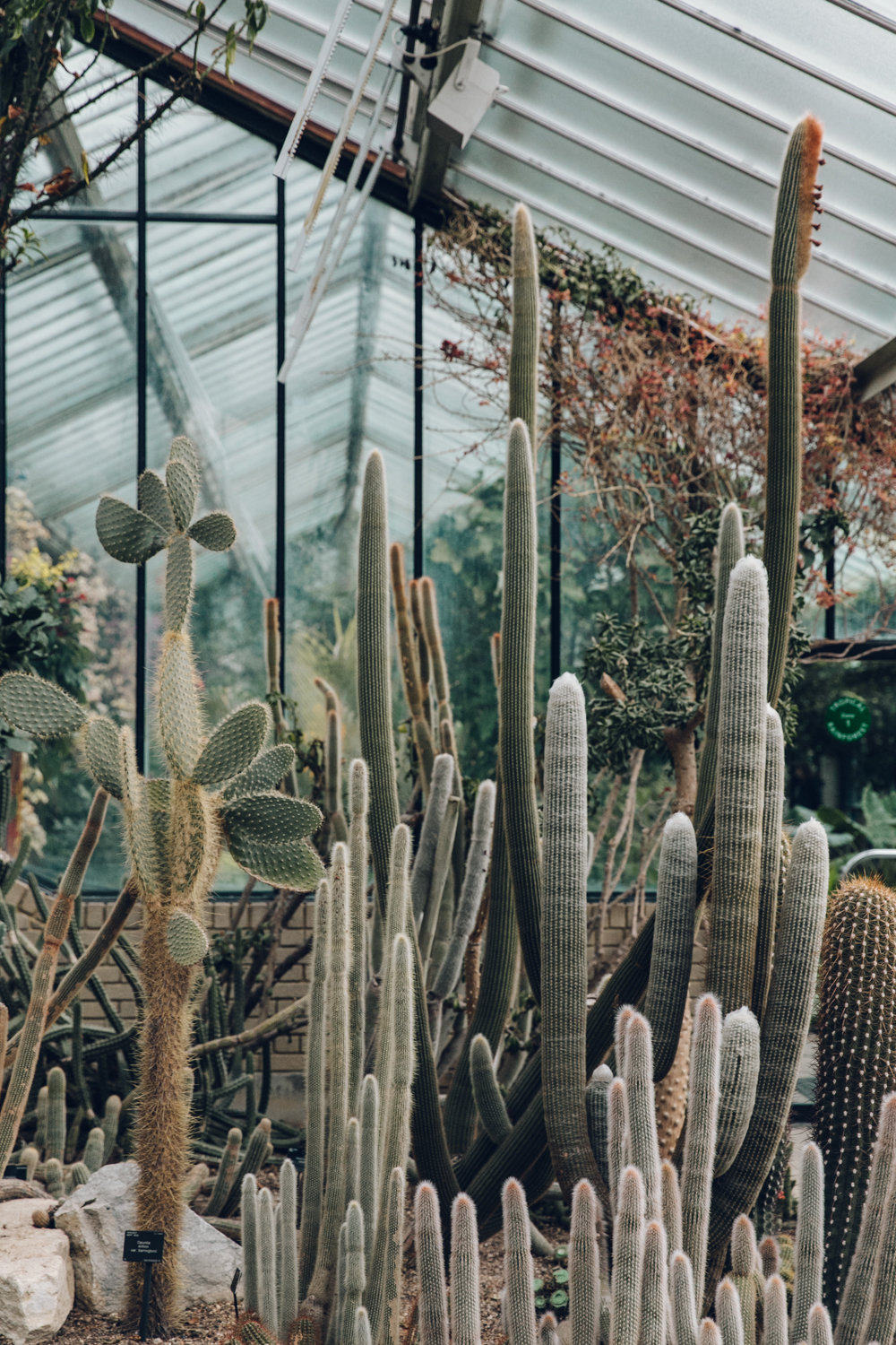 Haarkon Kew Gardens Conservatory Glasshouse Princess Wales Greenhouse Plant Cactus Cacti