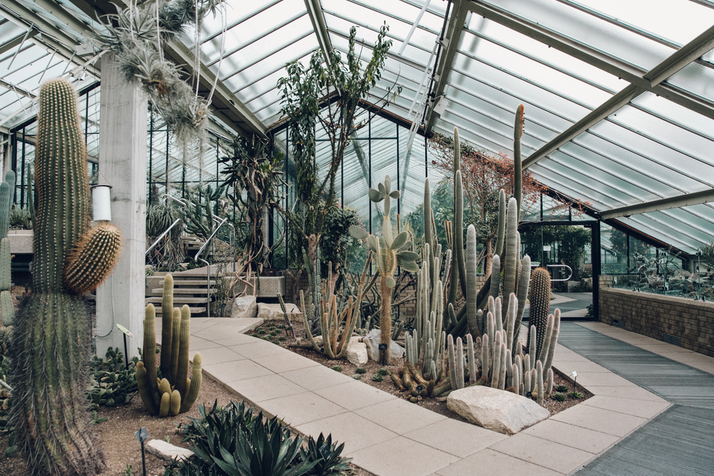 Haarkon Kew Gardens Conservatory Glasshouse Princess Wales Greenhouse Cactus Plant