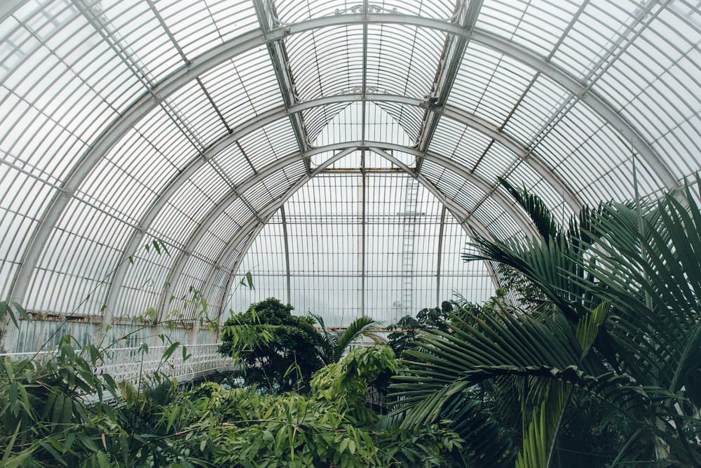 Haarkon Kew Gardens Palmhouse Palm Temperate Glasshouse Greenhouse Plants Greenery London Visit Roof Ceiling Canopy