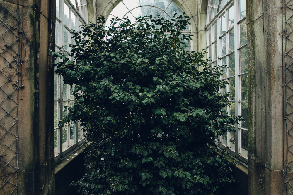 Haarkon Glasshouse Greenhouse Camellia House Conservatory Plants Nature Greenery