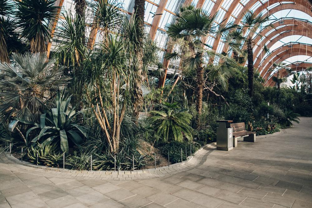 Haarkon Sheffield Winter Gardens Glasshouse Greenhouse Plants Light City