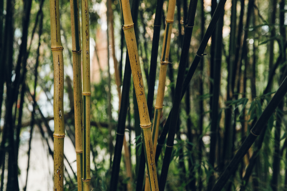 Haarkon Sheffield Winter Gardens Glasshouse Greenhouse Plants Light City bamboo