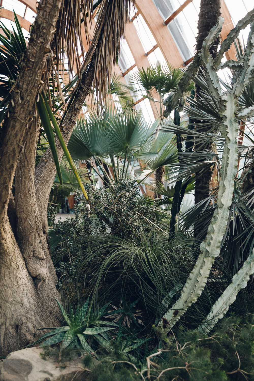 Haarkon Sheffield Winter Gardens Glasshouse Greenhouse Plants Light City Cacti Cactus Succulent