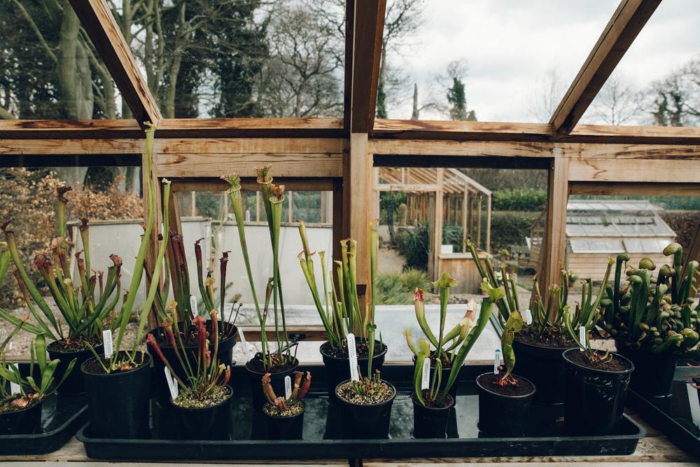 Haarkon Winterbourne Birmingham Garden Glasshouse Plants England Sarracenia Carnivorous